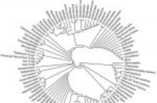 Article : L'arbre de vie et l'ancêtre commun