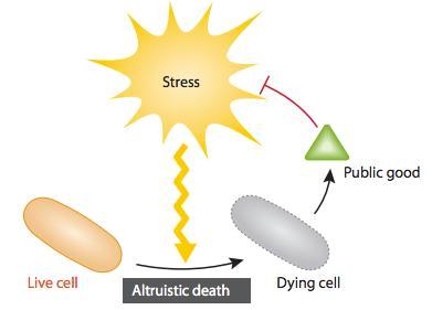 Suicide cellulaire alrtuiste