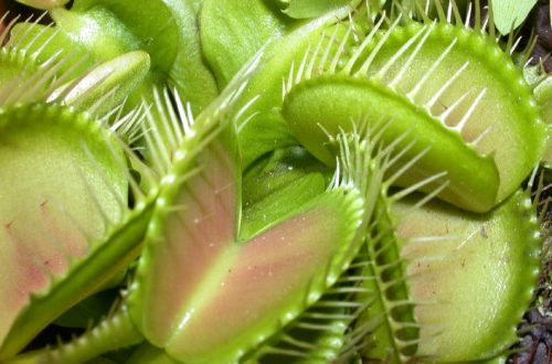 Article : La muscu des plantes carnivores