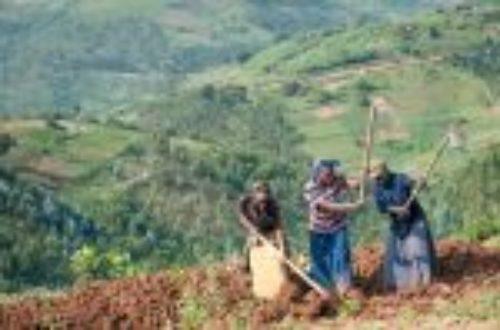 Article : Rwanda, l'origine des identités meurtrières