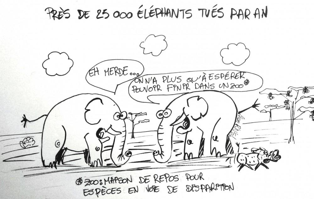 Les derniers éléphants finiront dans un zoo. Rock'n'Science