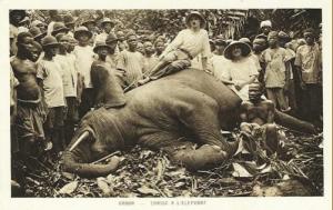Gabon - Chasse à l'éléphant