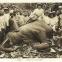 Chasse éléphant Gabon