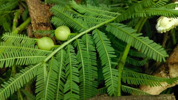 Cocon végétal