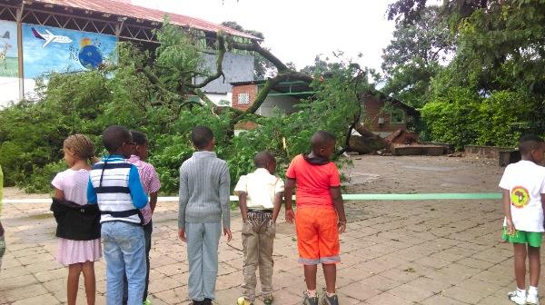 élèves acacia
