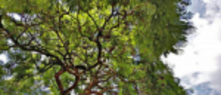Article : Au Rwanda, l'opération de biodiversité numérique «J'emporte mon arbre»