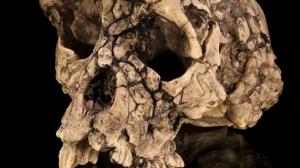 sahelanthropus tcadensis