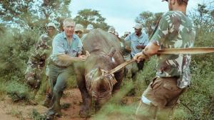 Réintroduction des rhinos à l'Akagera, Rwanda