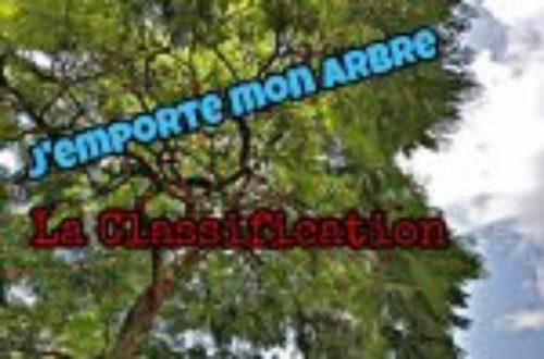 Article : « J'emporte mon arbre » : la classification