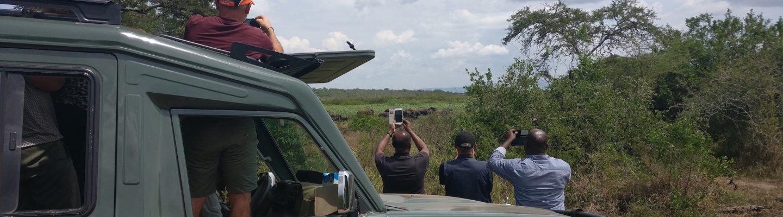 Touristes aux elephants