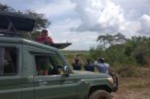 Article : Les touristes aux éléphants