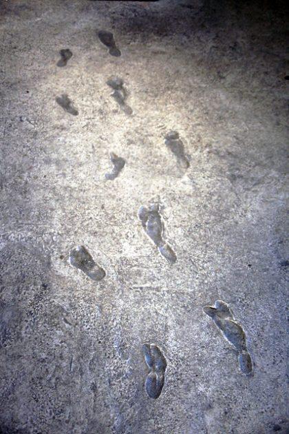 traces laetoli